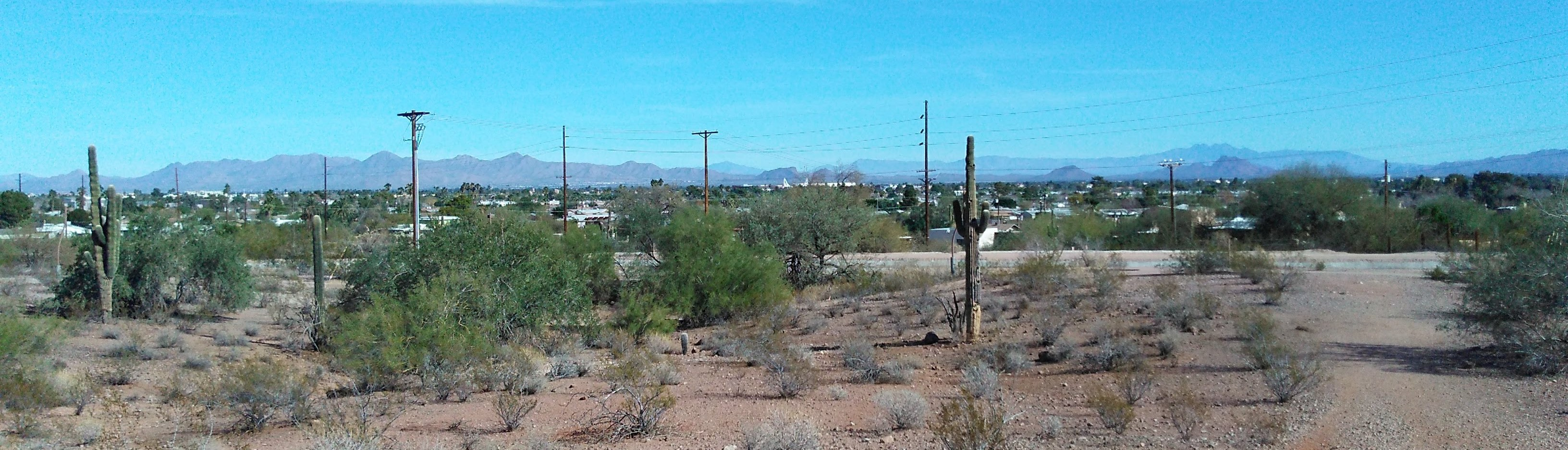 Mountains and cactus. Typical Arizona view.